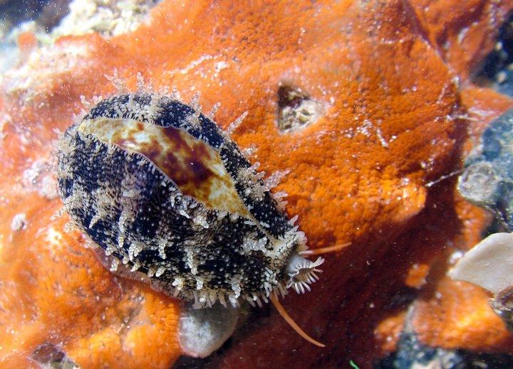 Piccolo e umile mollusco ! di deep