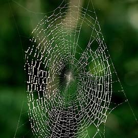 by Biljana Nikolic - Nature Up Close Other Natural Objects (  )