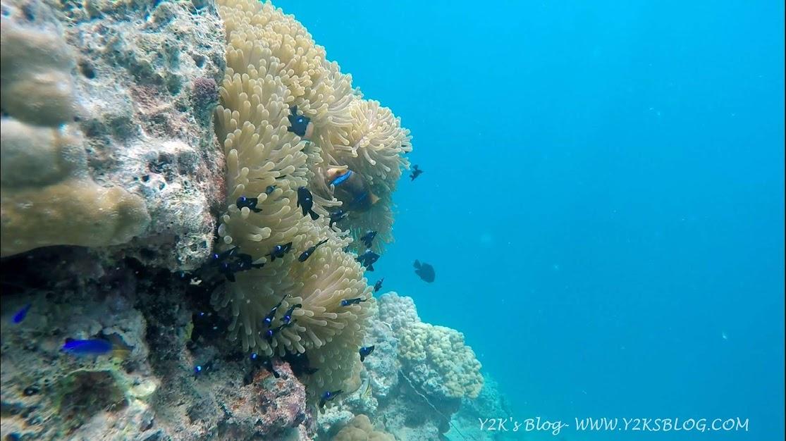 Anemone e Pesce Clown - Taha'a