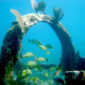 Calm beneath the Sea by Anastasiya Manuilov - Landscapes Underwater ( florida, key largo, underwter )