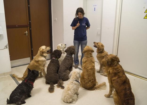 Собаки уважно слухають людину