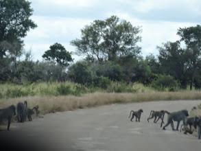 Photo: Baboons