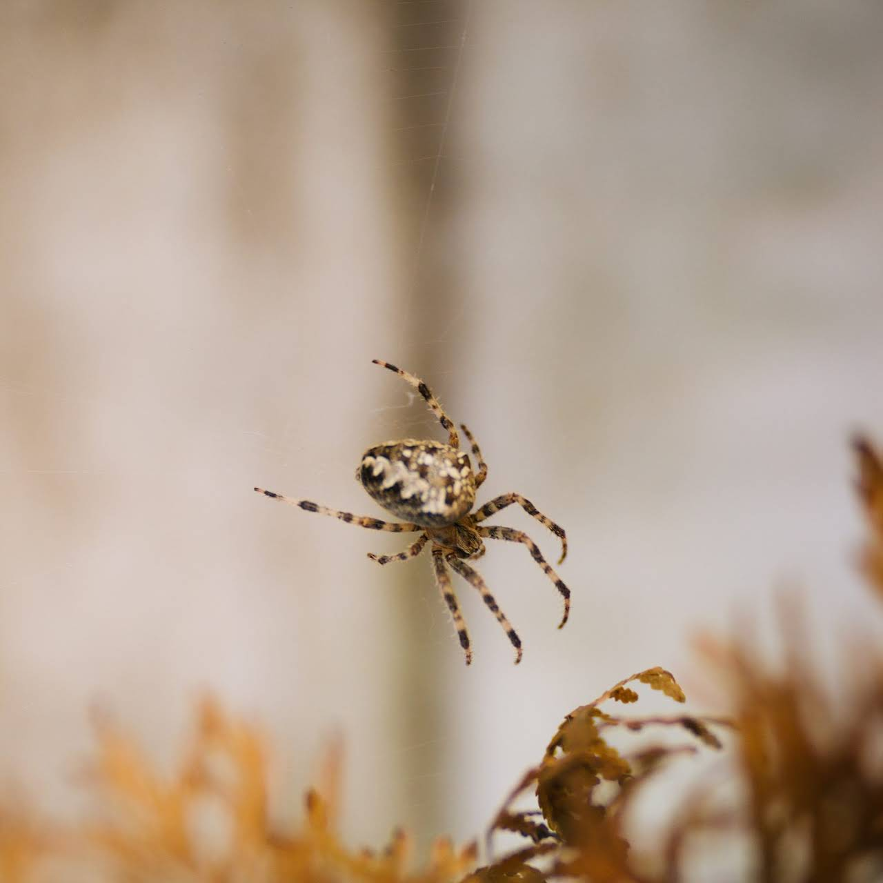 Termite Busters of Hayward - Pest Control Service