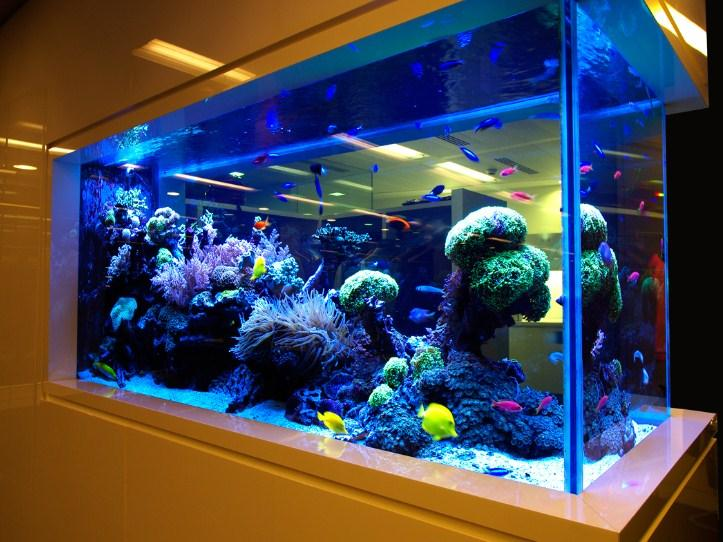 Aquarium design android apps on google play - Home aquarium designs ...