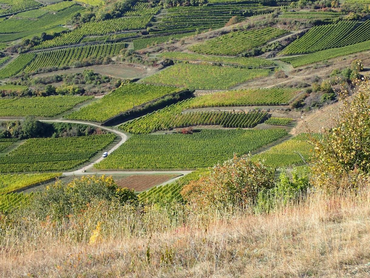 Le vignoble de Westhalten depuis la colline du Strangenberg
