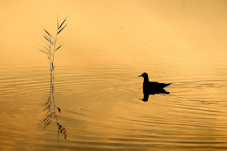 "Photo: 6. ""La charca dorada"" de Javier Garcia."