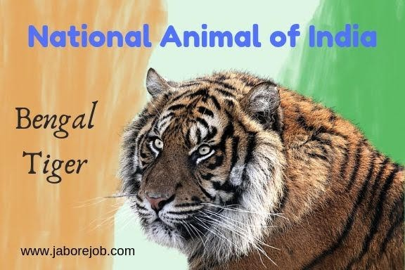 National Symbols of India, National Animal of India