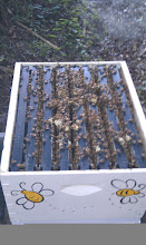 Photo: burr comb on top and bees boiling onto top