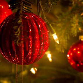 by Edwin Madera - Public Holidays Christmas ( holiday, lights, red, green, christmas, christmas tree, decorations, ornaments )