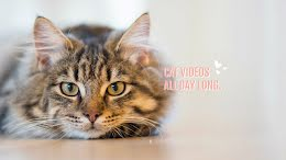 Cat Videos All Day Long - YouTube Channel Art item