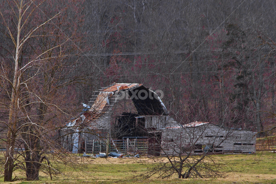 old barn by SumPics Photography - Landscapes Prairies, Meadows & Fields ( old, wood, barn, rusted, tin roof, trees, forest, decrepit )