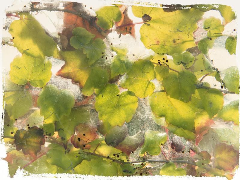 I colori di ottobre di giuliobrega