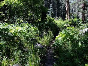 Photo: Dense stream side vegetation