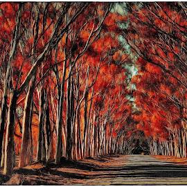 Fiery Lane by Glenn Visser - Digital Art Places ( red, trees, lanr, road, fire )