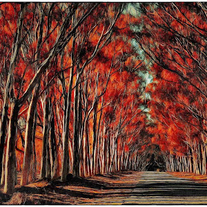 FB_Trees of Fire_NoName_2015-06-26.JPG