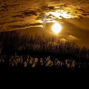Sunset by Dan Gomm - Landscapes Sunsets & Sunrises ( sunset, calming, clouds, trees, sun, landscape )