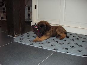 Photo: Bodi in haar nieuwe huis