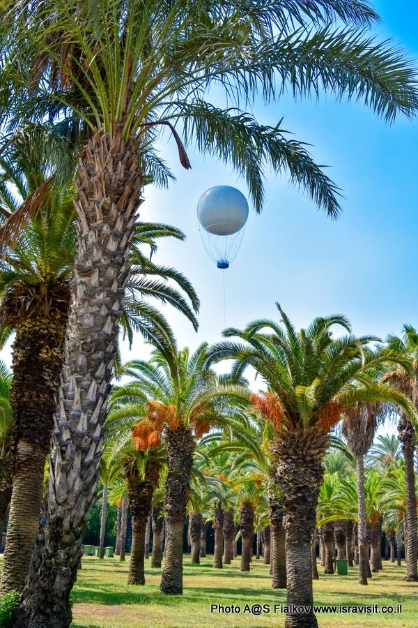 Парк Яркон в Тель-Авиве. Экскурсии в Тель-Авиве. Гид в Израиле Светлана Фиалкова.