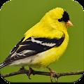 Bird Wallpaper HD APK