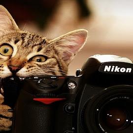 Cat & Camera by Bob Willam - Animals - Cats Kittens ( cat, bite, camera, nikon, kiten )