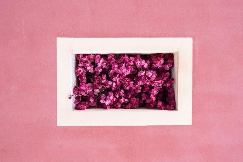 La finestra di fiori di Tiziana Detoni