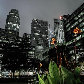 City Park by Ralph Sobanski - City,  Street & Park  City Parks ( urban, skyline, park, canada, skyscrapers, toronto, plants, ontario, city, night, lights )