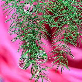 by James Driscoll - Flowers Flower Arangements