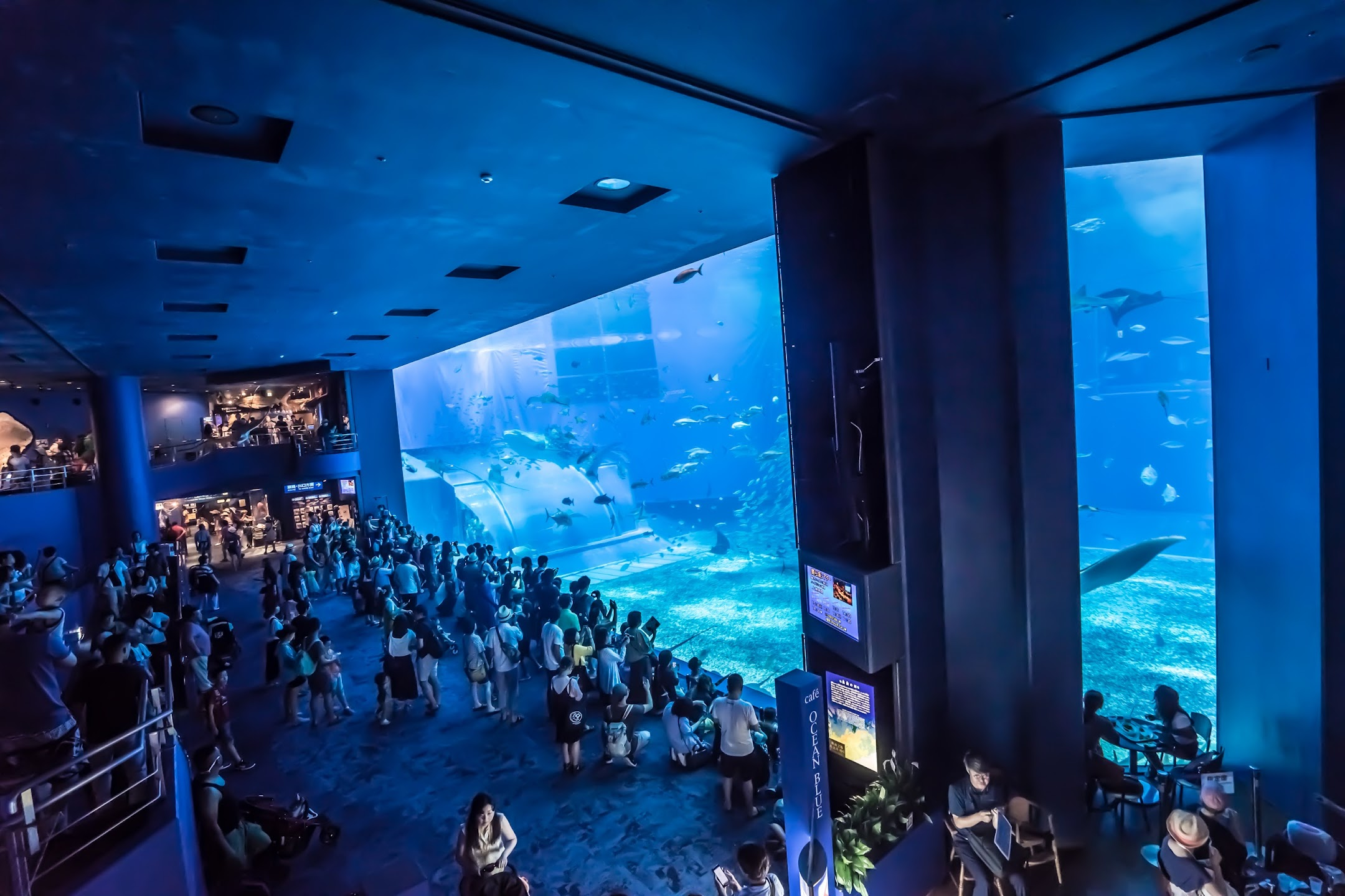 Okinawa Churaumi Aquarium1