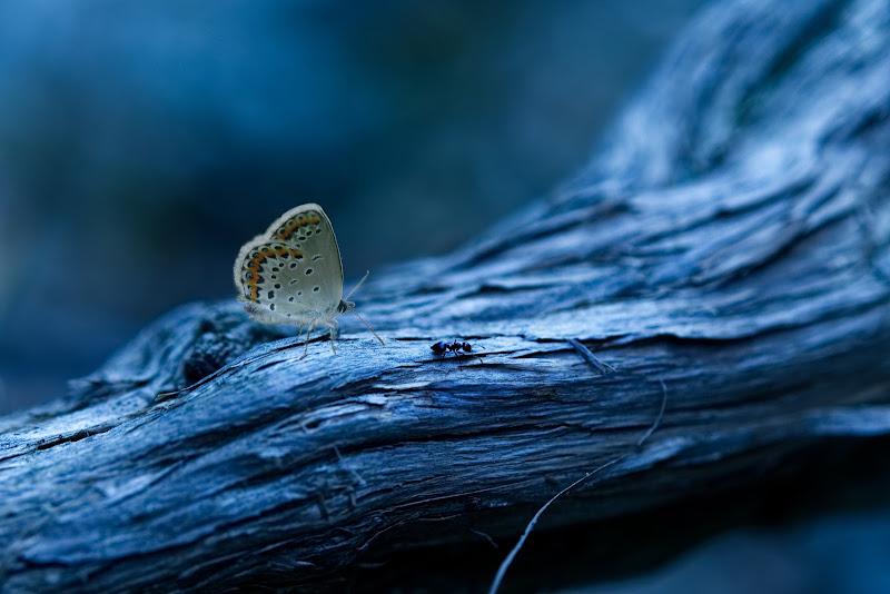 La farfalla e la formica di Daniela Ghezzi