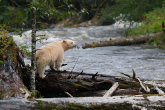 Photo: It wandered onto the logs upstream, striking more great poses for us.
