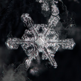 Snowflake by Elliot Mednick - Nature Up Close Other Natural Objects ( macro, winter, macro photography, snow, snowflake, macro shot )
