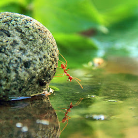 Me and my reflections by Muhammad Buchari - Animals Insects & Spiders