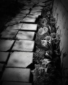 Dramatic Black & Whiteのおすすめ画像3