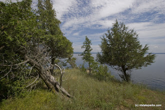 Photo: Wind swept trees at Knight Island State park by Gary Hall
