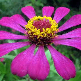 Flower Pink Yellow Petal Green by Ashish Bikram Thapa - Nature Up Close Flowers - 2011-2013