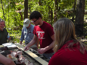 Photo: Picking meat from the pig.   Pig bones were one of the items that confirms the location as a DeSoto period site.