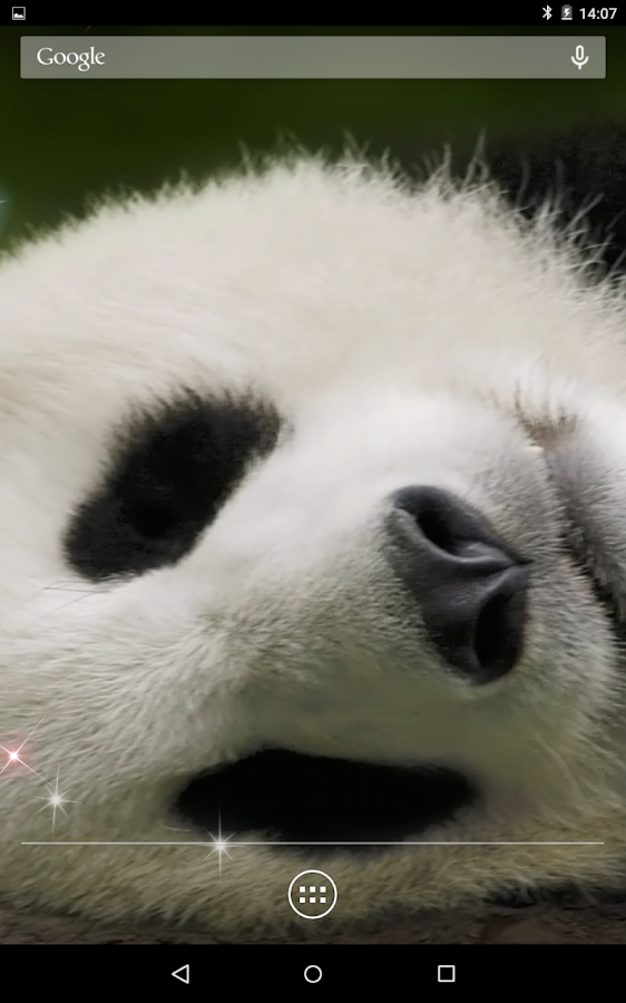 panda 3d live wallpaper android apps on google play