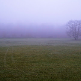 The morning fog on a field by Svetlana Saenkova - Landscapes Weather ( foggy, field, single tree, autumn, fog, morning,  )