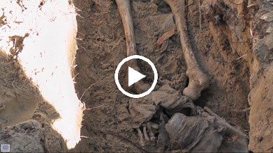 Video: Plastic skeleton along with 'evidence' to simulate a real 'forensic' case.  Application of archaeology and osteology to crime scene settings.  The FSU/IPTM course is the longest running forensic field course in the country.