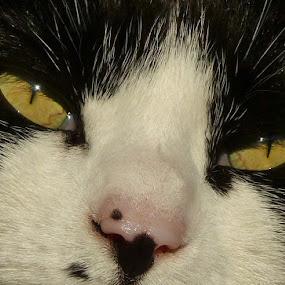 Say, Sleeep by Martin Brown - Animals - Cats Portraits ( cat, lumix, close up, portrait, animal )