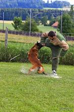 Photo: Doc du Clos d'Alsan chien blanc