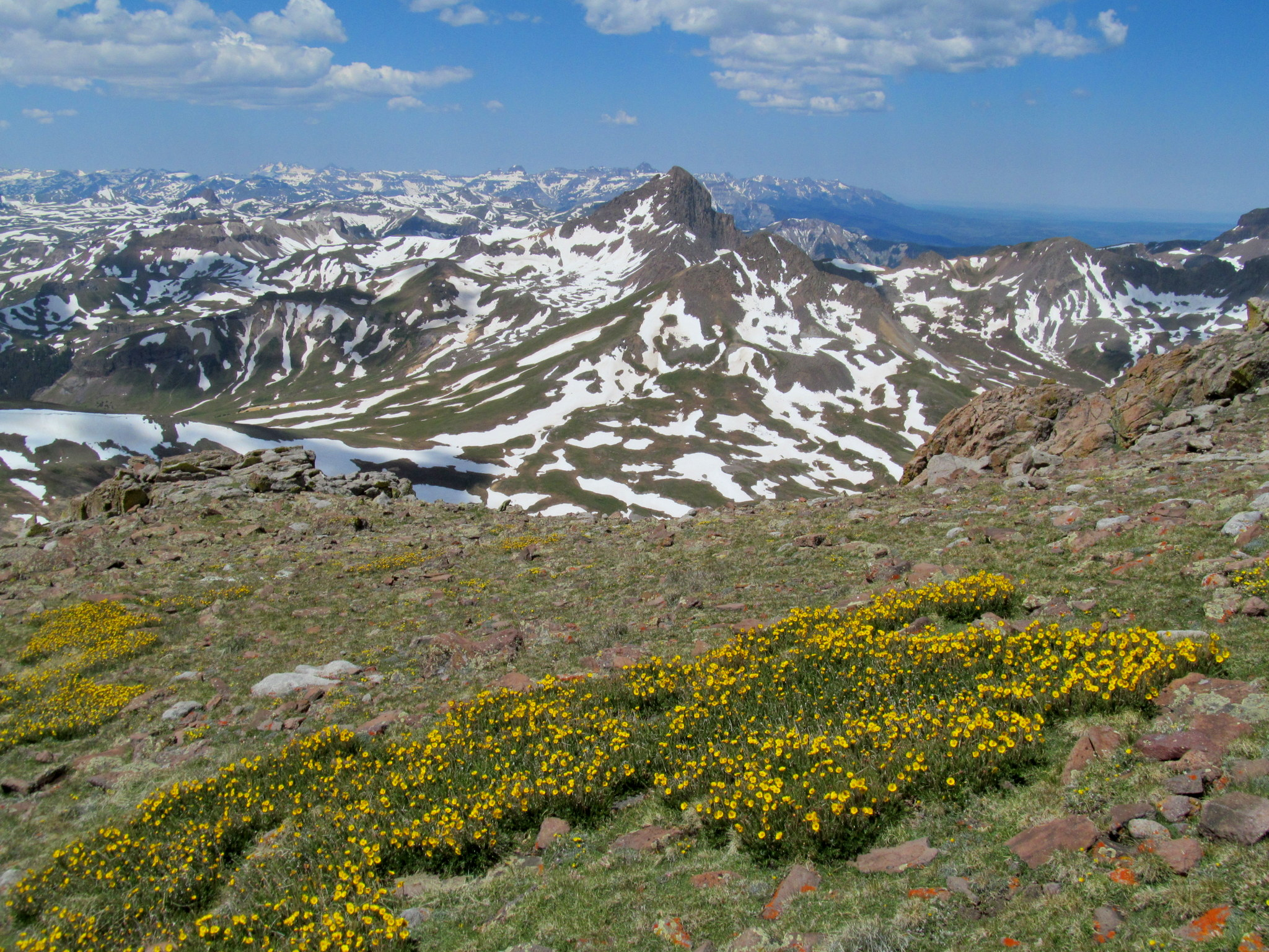 Photo: Wetterhorn and wildflowers