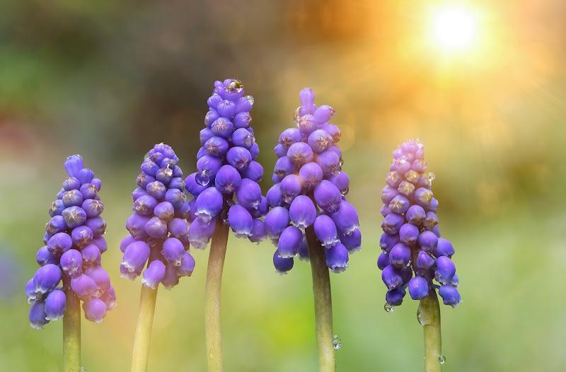 Sugli attenti.,la primavera è arrivata di ______