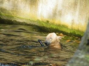 Photo: Knut hat Spass mit dem Schlauch :-)