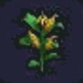 トウモロコシ(ビルダーハンマー)