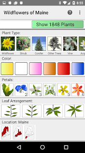 Maine Wildflowers- screenshot thumbnail