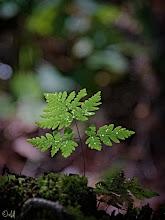 Photo: The Tiny Fern  #FernFriday