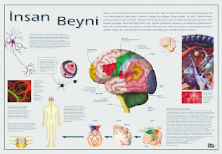 Photo: İnsan Beyni