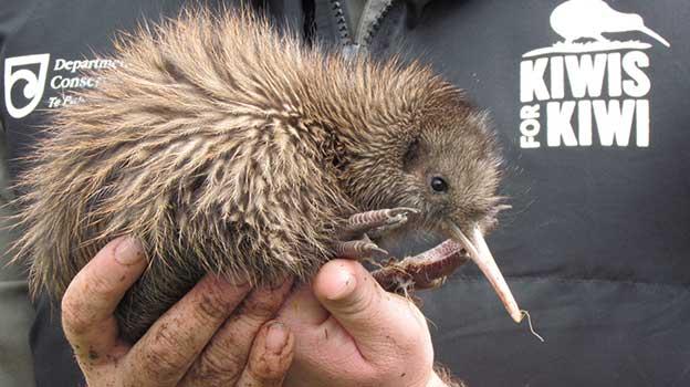 Kiwis for kiwi™