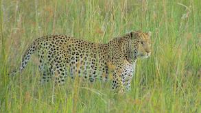 The Okavango: Lifeblood of the Kalahari thumbnail